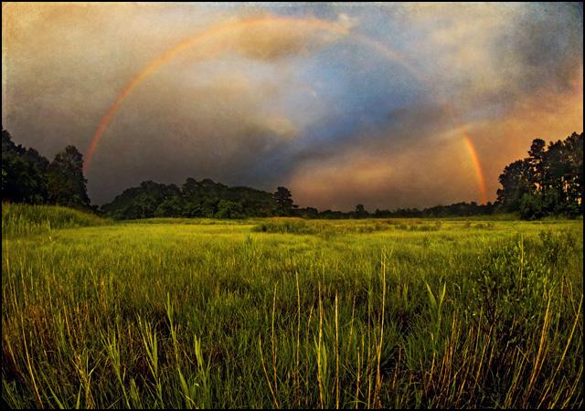 Canary-Creek-Rainbow-25576-txt-lr